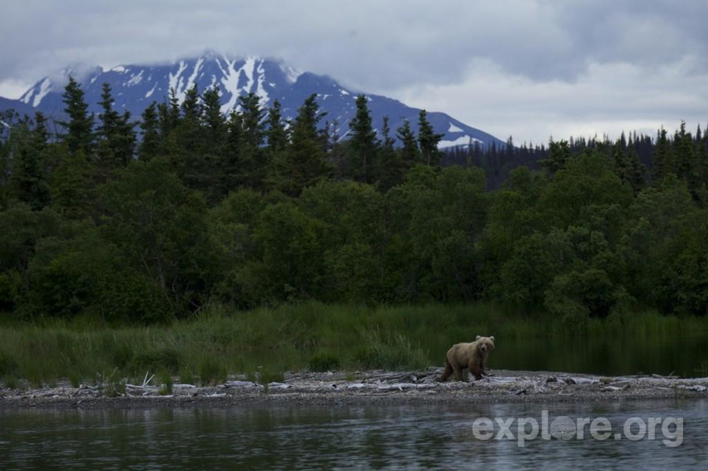explore-bear-on-a-stoll