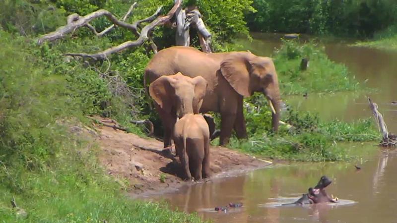 June 11th 2014 ~ Hypo & Elephants (585328)