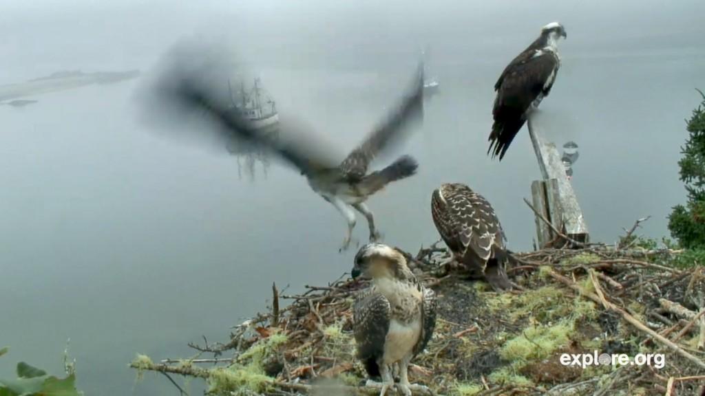 Osprey Flight 1