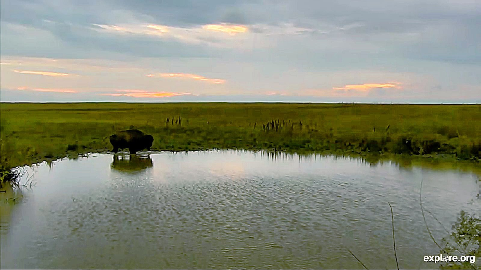 Bison_Sunrise_WateringHole