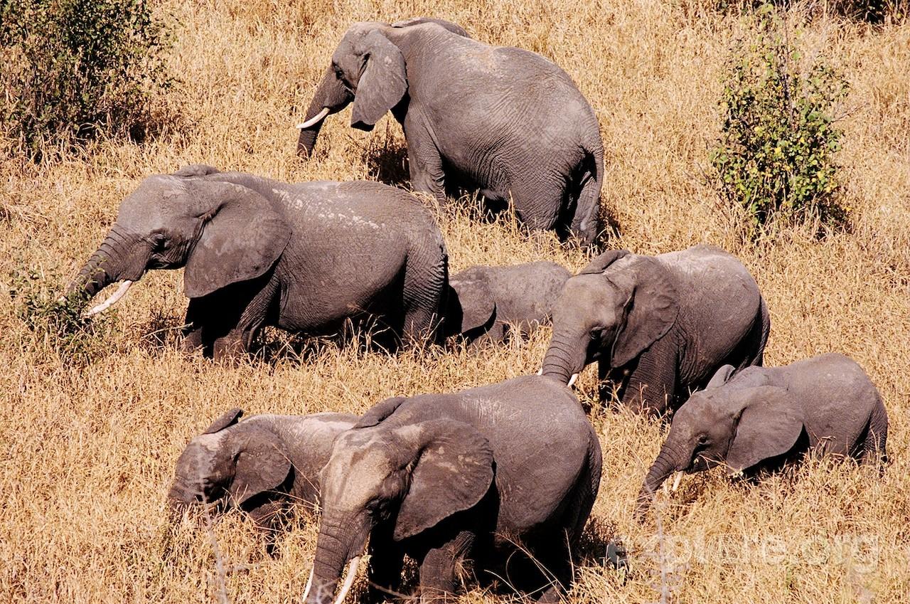male-and-female-elephants_explore