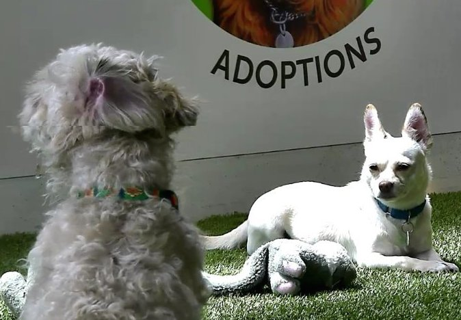 The Pups of Animal Wellness Center, Snapshot from RobNJ