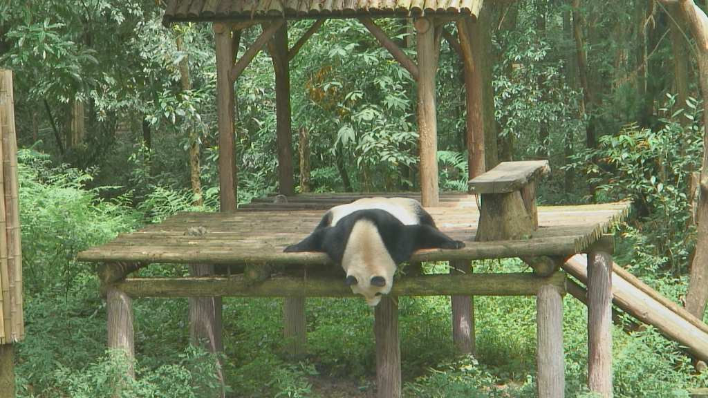 panda-Copaz-NJ