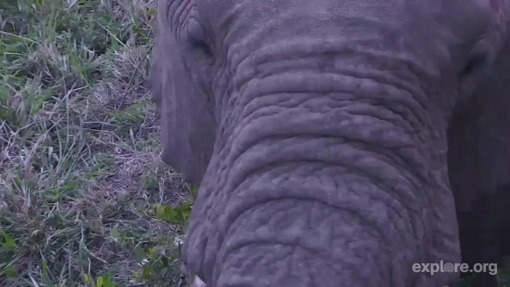 elephant_closeup_africa