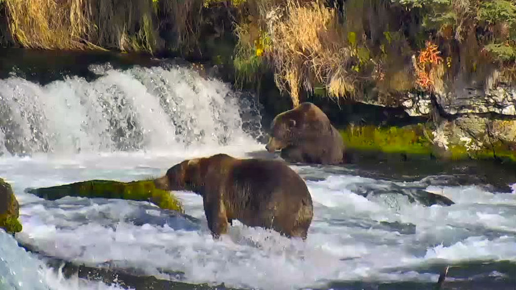 Caption-This-Brown-Bears-092914