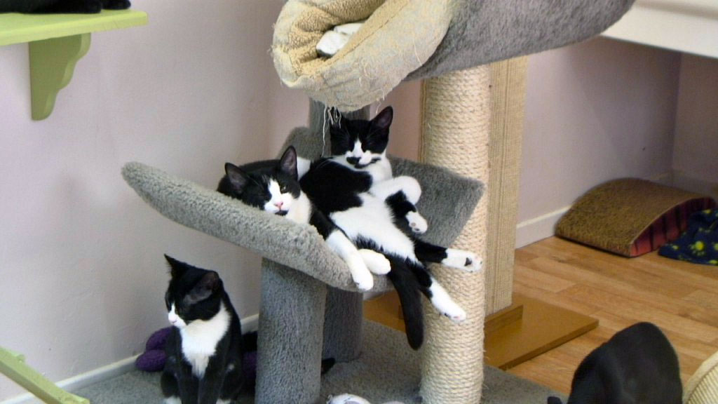 kittens lying in a kitten tree