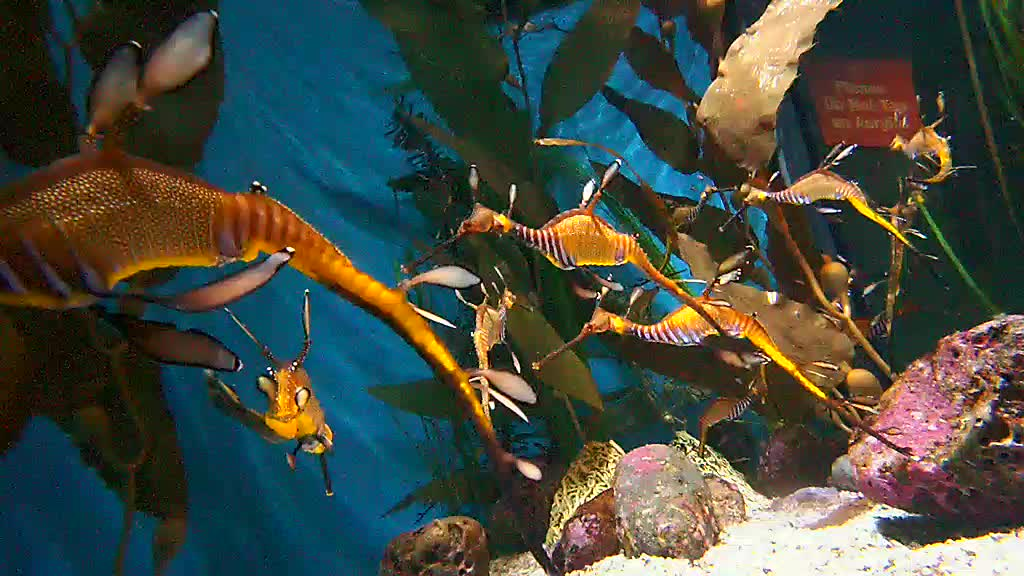 Top 5 Weedy Sea Dragon...