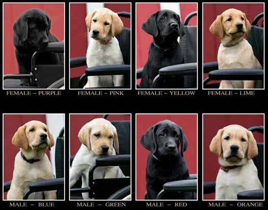 ECAD_Puppies_Auction_naming