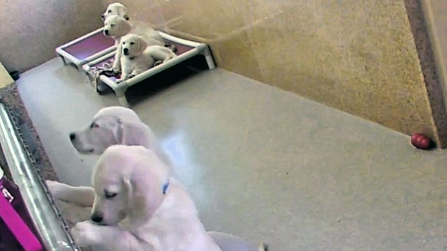 Freedom's Puppies at Bergin University
