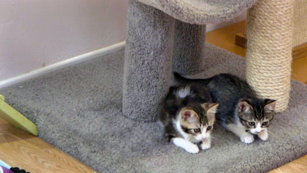 two kittens ready to pounce