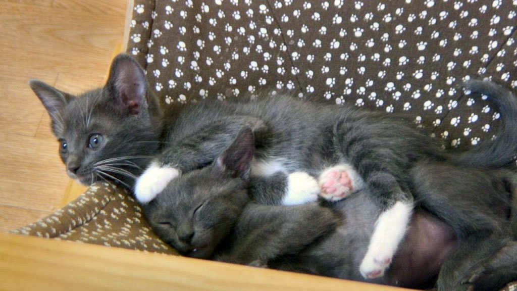 kittens snuggling