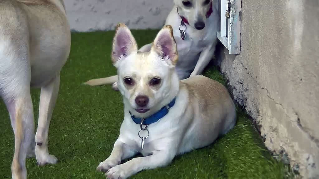 puppy wellness adoption center