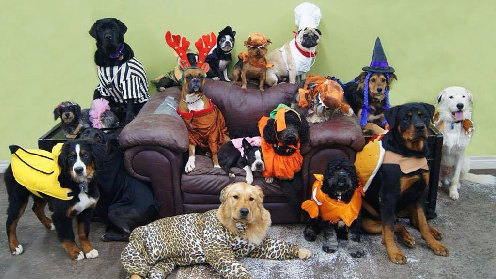 Great Dogs in Costume from Happy Dogs!