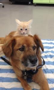Photo: Arizona Humane Society