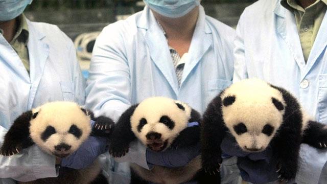 Ju Xiaos triplets