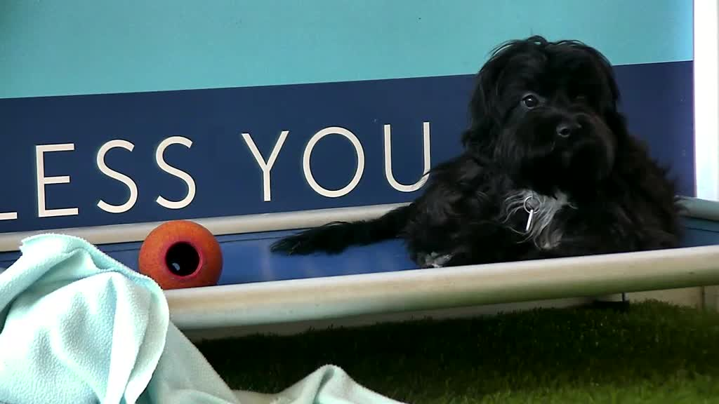 Little black pup taking a pause from playing ball. Photo captured by member JoanDesmond.