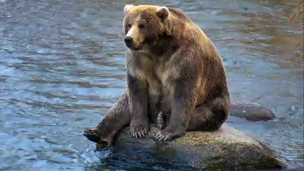 brown bear sitting on a rock