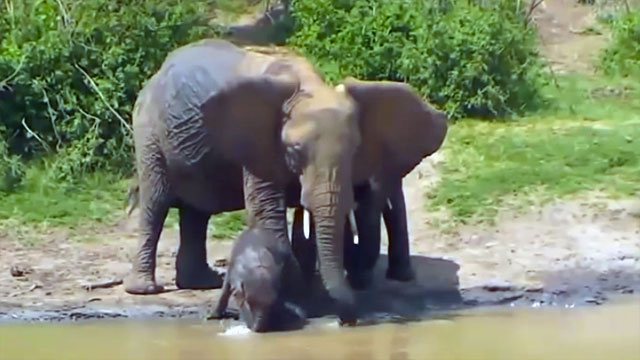 Baby elephant playing in the water