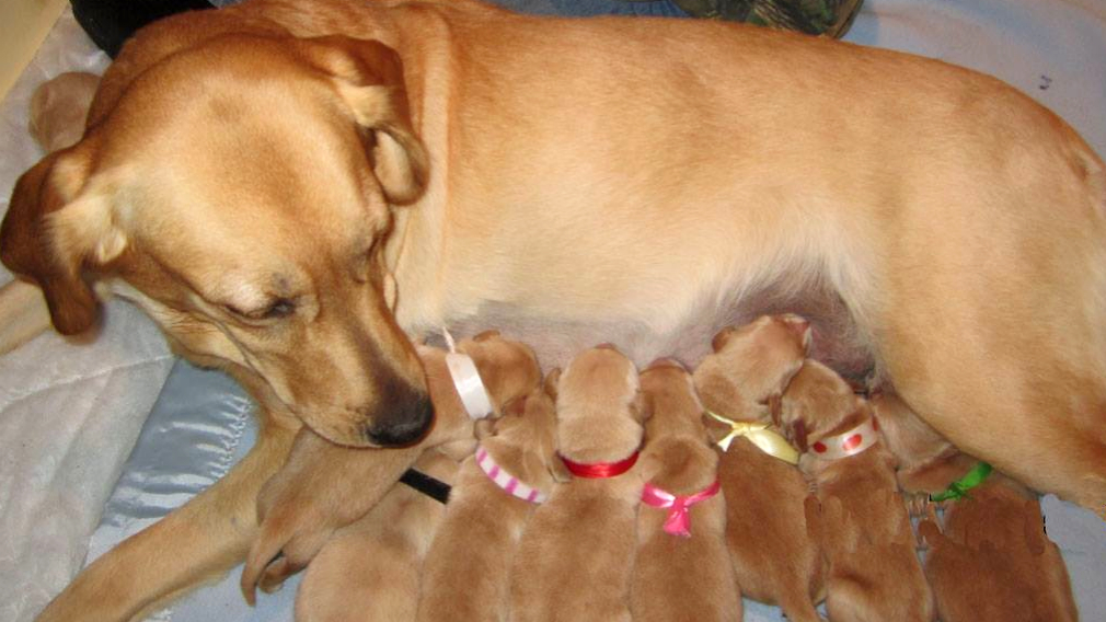 Maya has 11 pups, growing up fast!