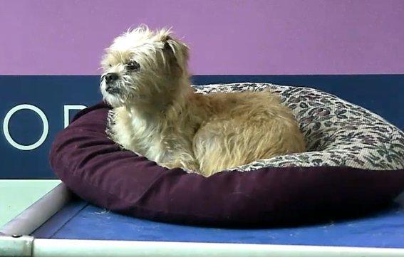 animal wellness adoption center