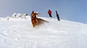 Avalanche Dogs are the Ultimate Hope of Rescue