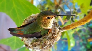 Meet little Heddy Hummingbird!