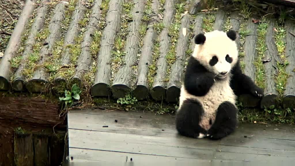 Xiao Shen Bin enjoys a snack