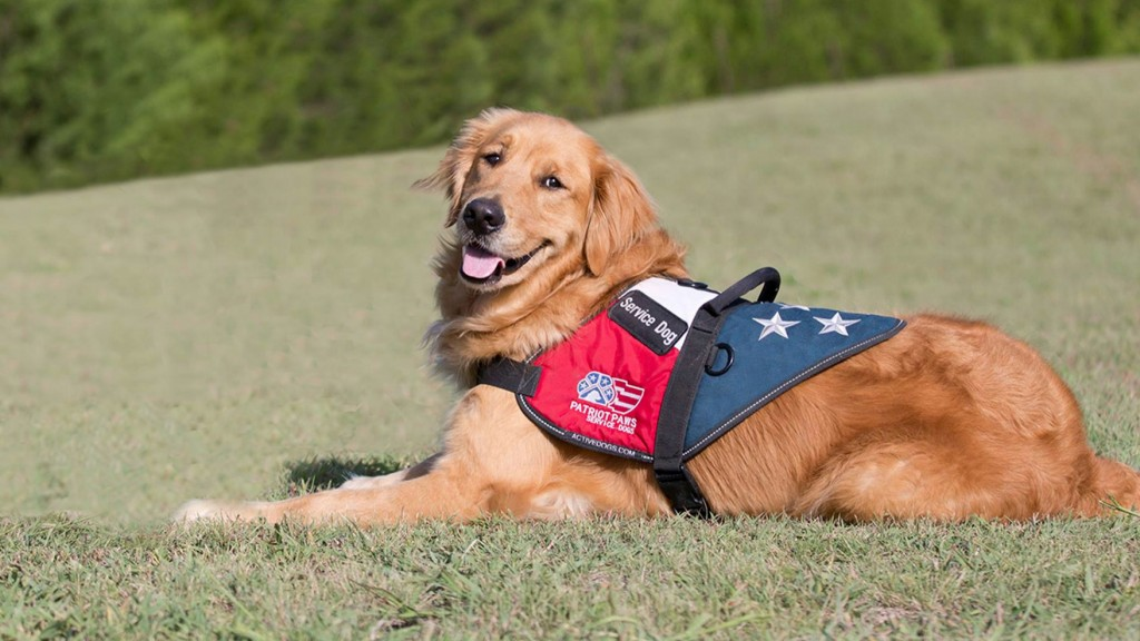 Patriot PAWS provides service dogs to veterans.