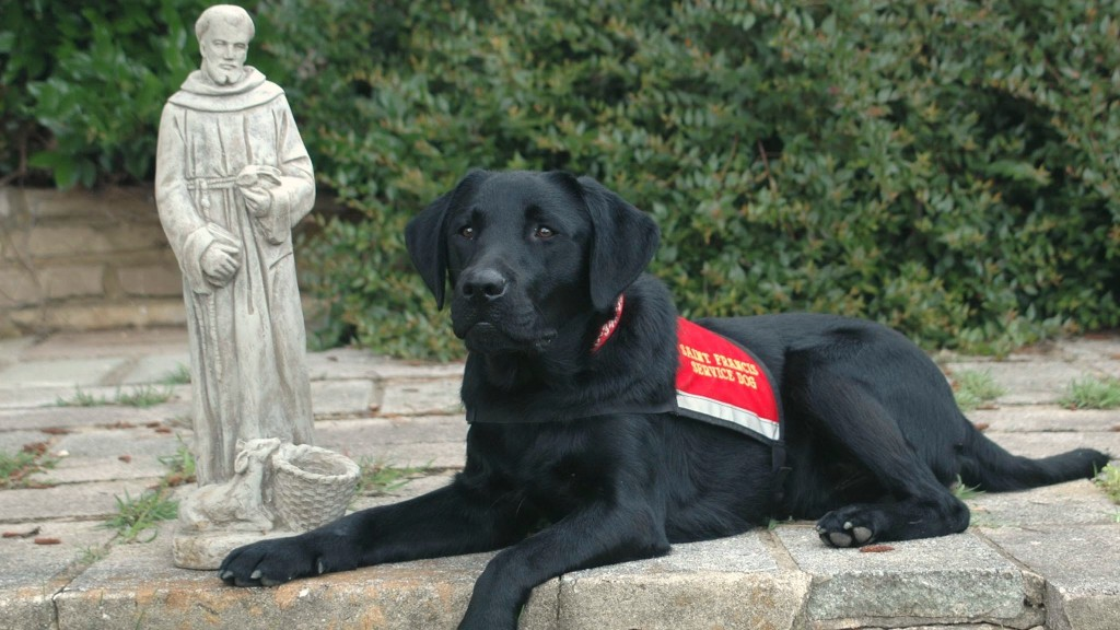 A loyal assistant from Saint Francis Service Dogs