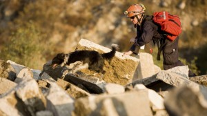 Search Dogs deployed to Nepal to find survivors
