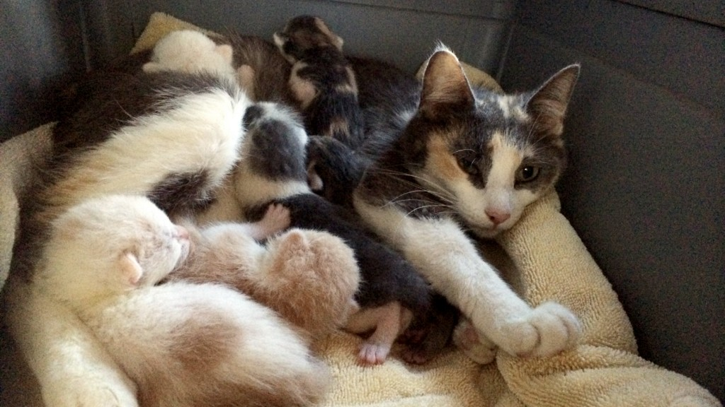 Meet the new family at Kitten Rescue