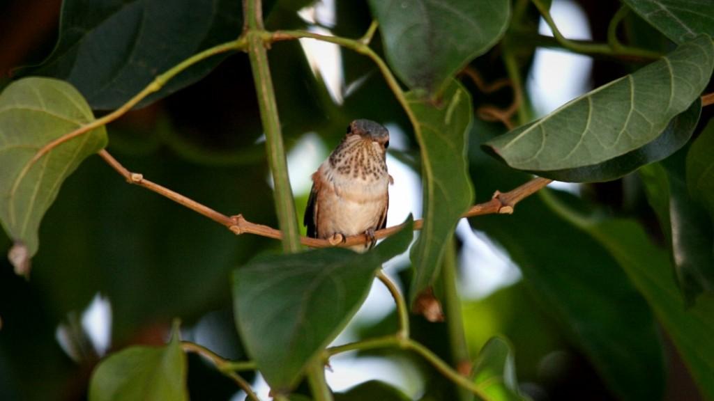 Peep on a vine.