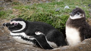 Live Chat Friday with Penguin Expert Dudley Wigdhal