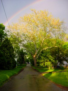 Rainbow Lane by Peggy Barry