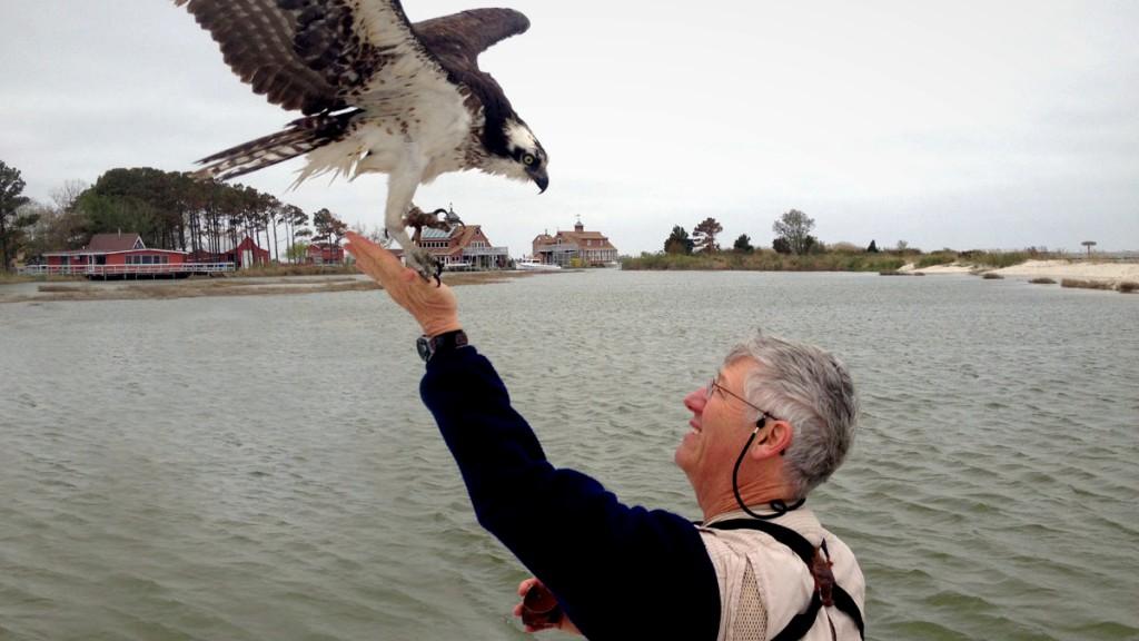 Osprey expert Dr. Rob Bierregaard