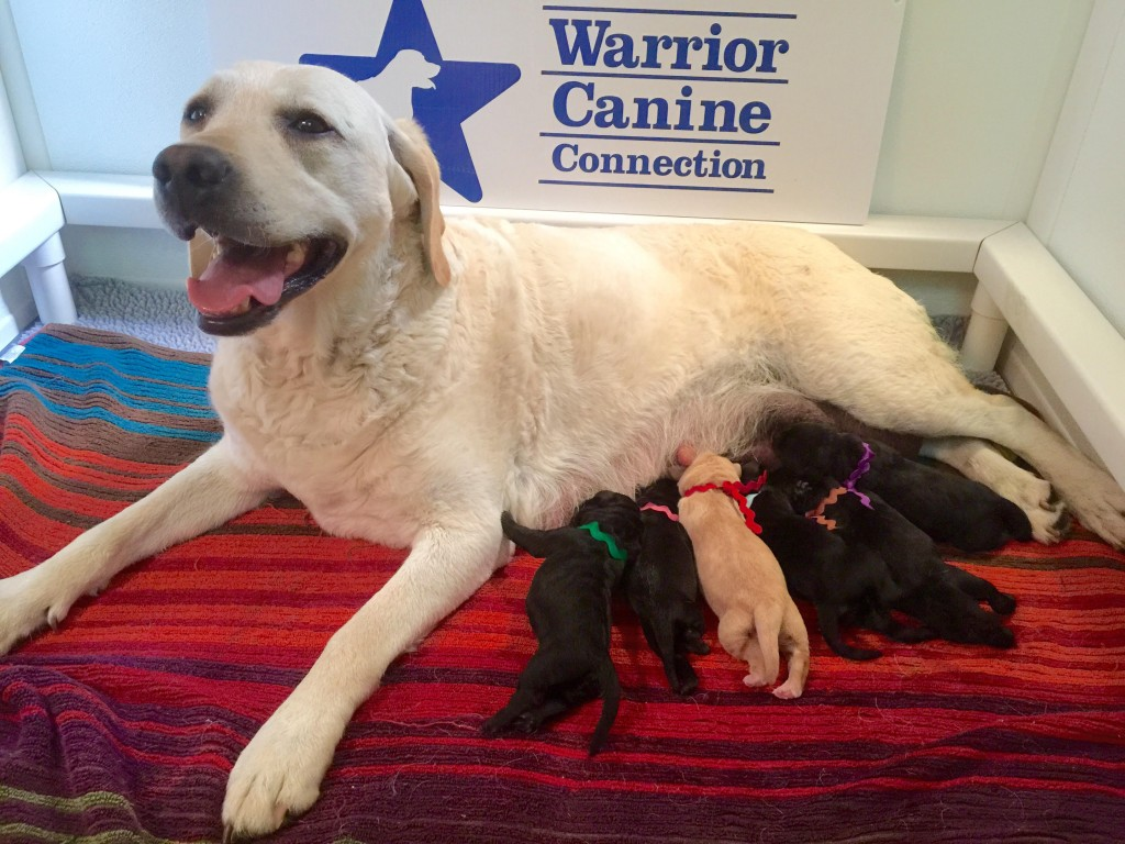 Olive and her new Honor Litter