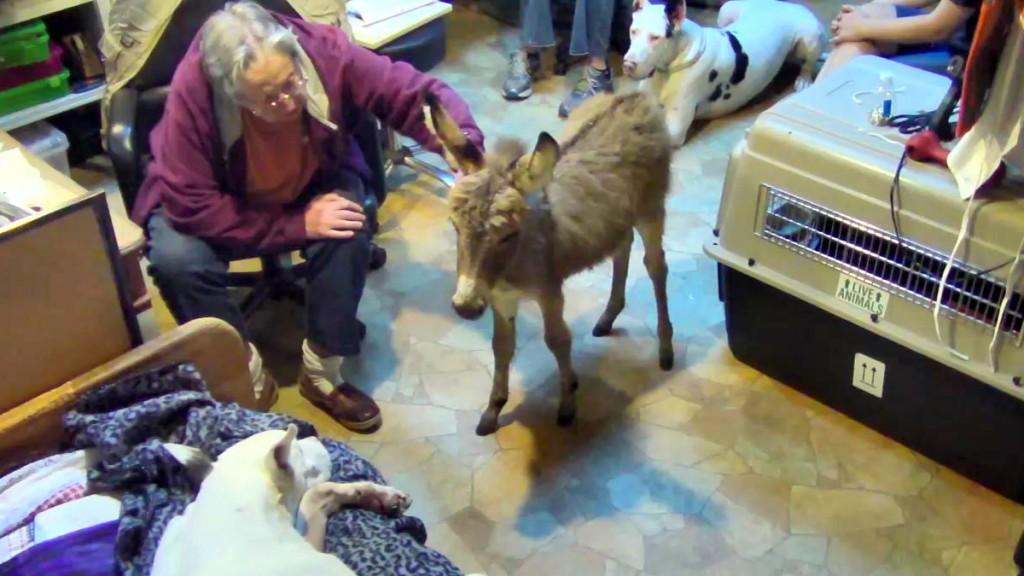 Carlene pets the new SDP donkey