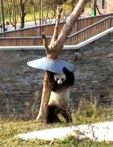 Panda2_TreeGuard_Fotor1