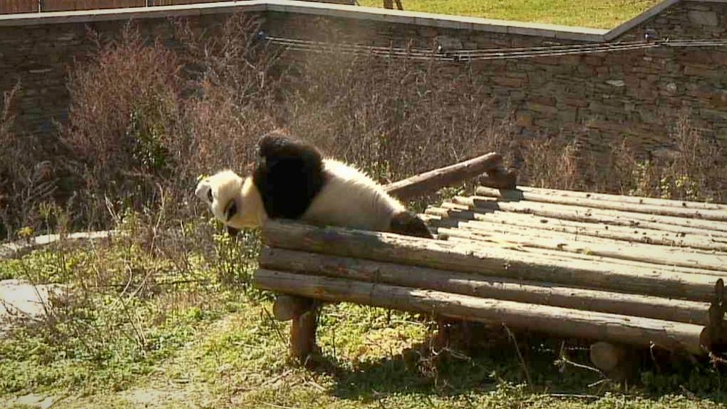 Panda3_Fotor
