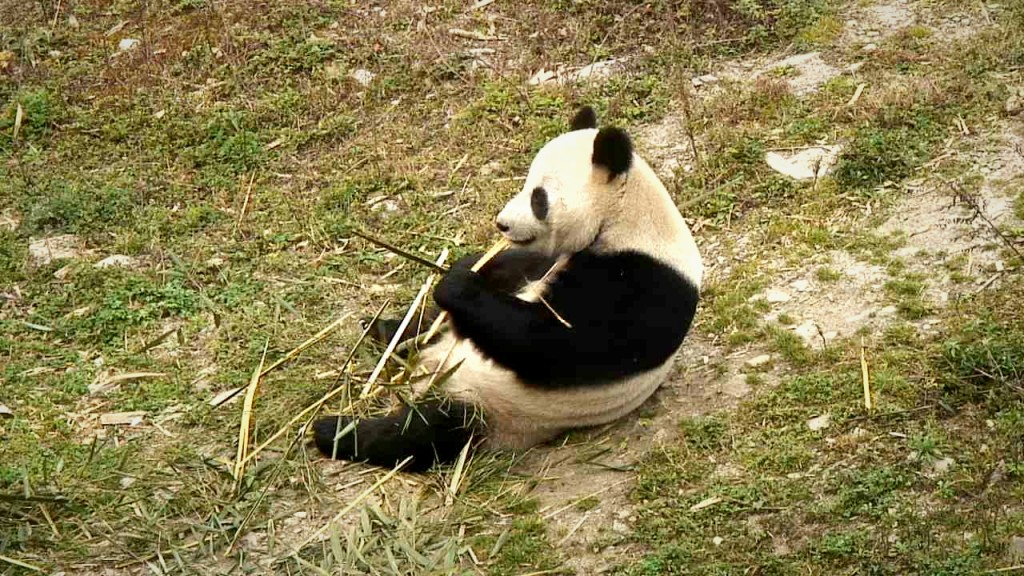 Xiang Lin having a snack