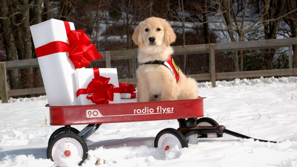 The pups of Saint Francis Service Dogs wish you happy holidays!