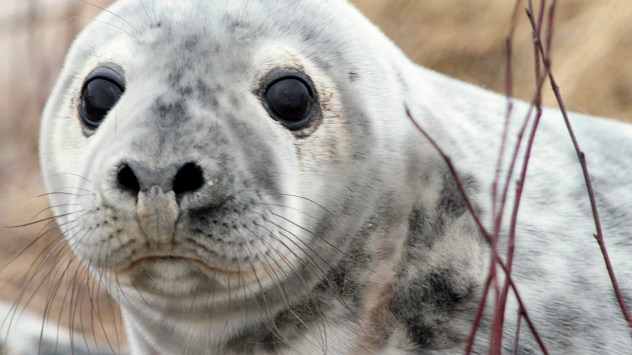 Who can resist the cuteness of seal pups?