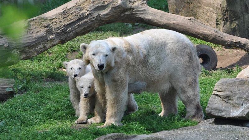 Huggies and her cubs