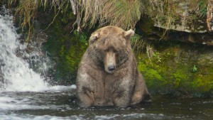Do Bears Fish Brooks Falls in September?