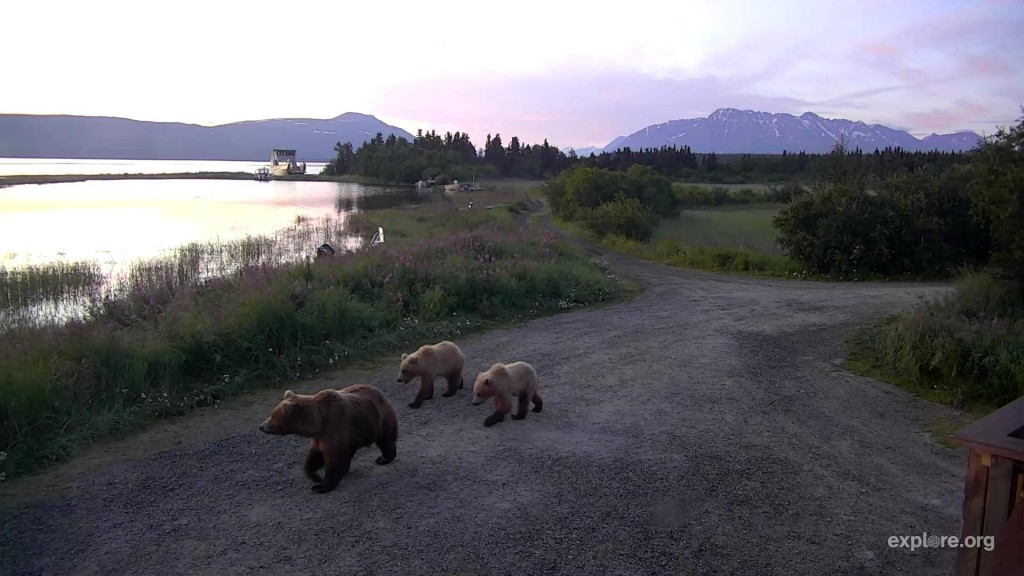 Beautiful image of mom and sweet little cubs | Snapshot by @OHaraAmber