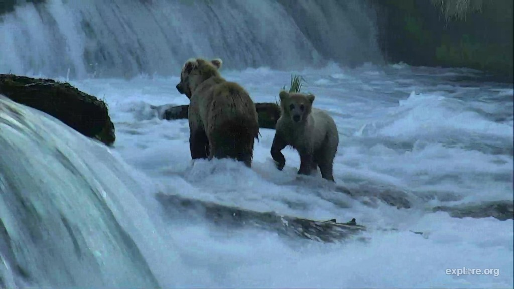 Early bears get the fish! | Snapshot by MelissainOR