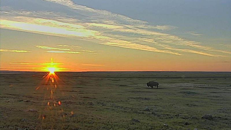This morning's sunrise on our bison cam | Snapshot by RandyJacobs