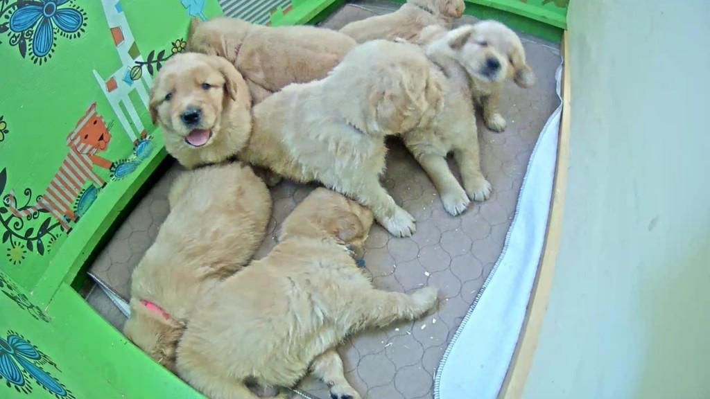 Cuddly pile of pups | Snapshot by neni hiou