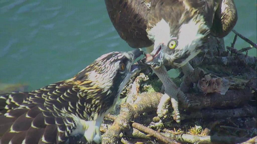 Feeding time! | Snapshot by BellaNonna
