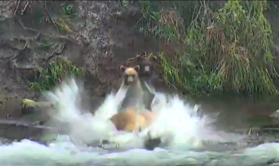 Mama G jumping to catch a fish   Snapshot by Cheryl Burnside